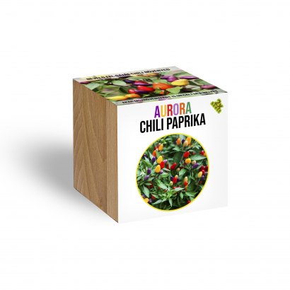 Aurora Chilli növényem fa kaspóban
