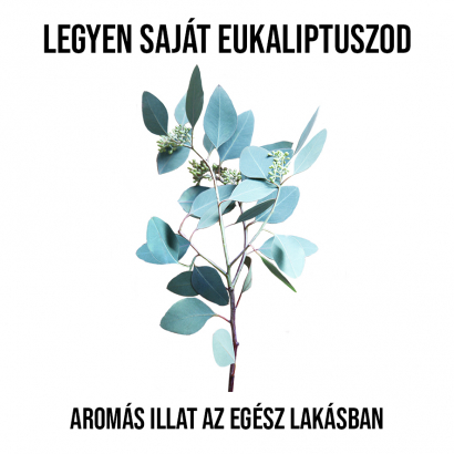 Eukaliptusz növényem fa kaspóban