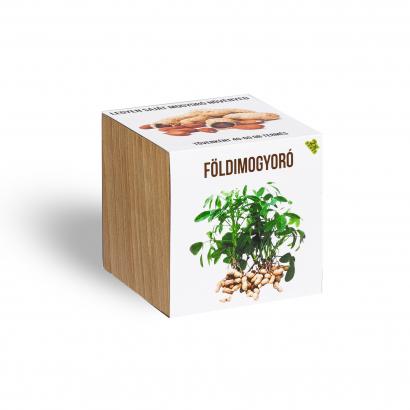 Földimogyoró növényem fa kaspóban