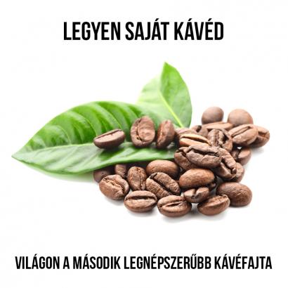 Kávé cserje növényem fa kaspóban