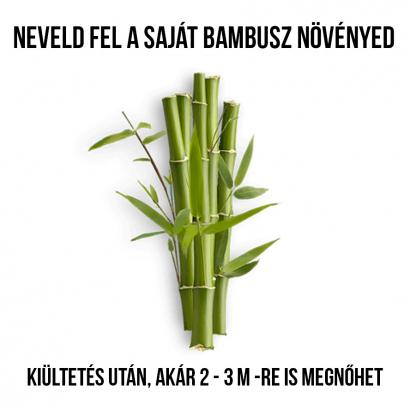 Moso Bambusz növényem fa kaspóban