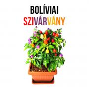 Bolíviai szivárvány chili paprika növényem fa kaspóban