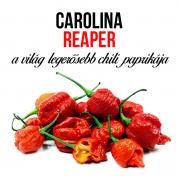 Carolina reaper chili paprika növényem fa kaspóban