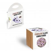Csokoládé illatú gomolyvirág magok díszdobozban