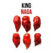 King Naga chili paprika növényem fa kaspóban