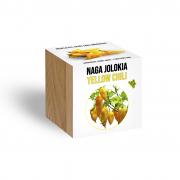 Naga Jolokia Yellow Chilli növényem fa kaspóban