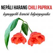 Nepáli harang chili paprika növényem fa kaspóban